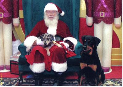 Koko-and-Ginger-Meet-Santa